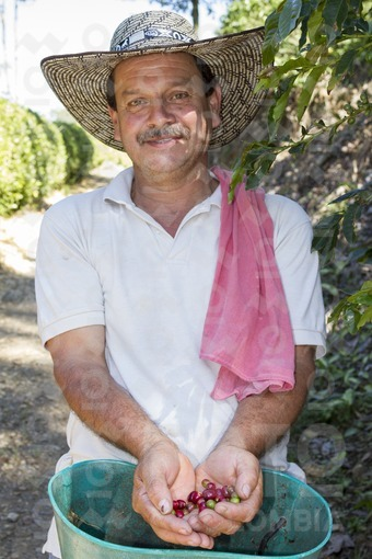 Recolector de Café,suroeste antioqueño / Coffee collector,southwestern Antioquia