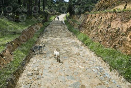 Sendero Ancestral,Parque Arví,Santa Elena,Antioquia / Ancestral Path, Park Arví,Santa Elena,Antioqui