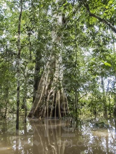 Río Amazonas / Amazonas river