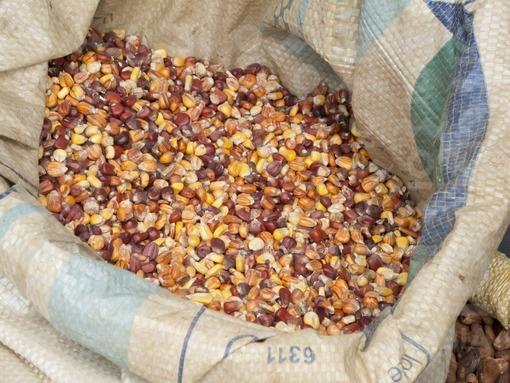Venta de granos y semillas,Plaza de Mercado,Santa Cruz de Lorica,Córdoba / Sale of grains and seeds, Marketplace,Santa Cruz de Lorica,Córdoba