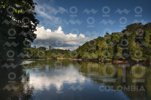 Paisaje Río Amazonas / Amazon River Landscape