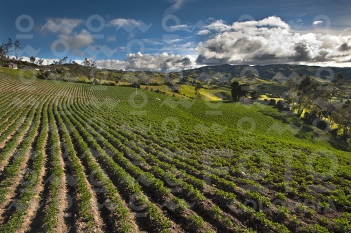 Paisaje,Nariño / Landscape,Nariño