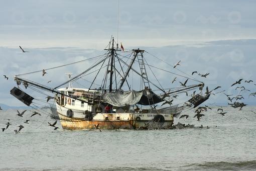 Barco pesquero,Pescador Nuquí,Chocó / Fishing Boat,Nuqui,Choco