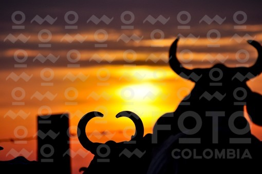 Ganado al atardecer,Arauca / cattle at sunset,Arauca