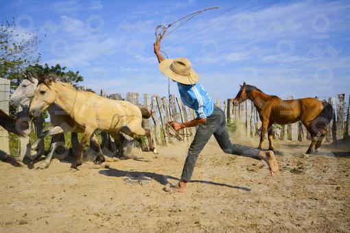 Llanero amarrando un caballo,Arauca / Ranger mooring a horse,Arauca