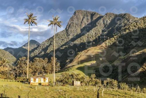Valle del Cocora,Qundío / Cocora Valley,Quindío