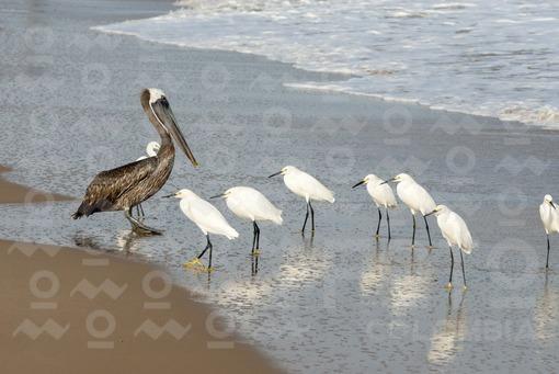 Santuario de Fauna y Flora Los Flamencos,Guajira / Flora and Fauna Sanctuary Los Flamingos,Guajira