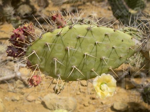 Cactus,Guajira / Cactus,Guajira