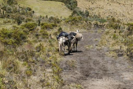 Caballos,Páramo del Volcán Nevado del Ruiz.Murillo,Tolima / Horses,Paramo.Nevado del Ruiz Volcano,Murillo,Tolima