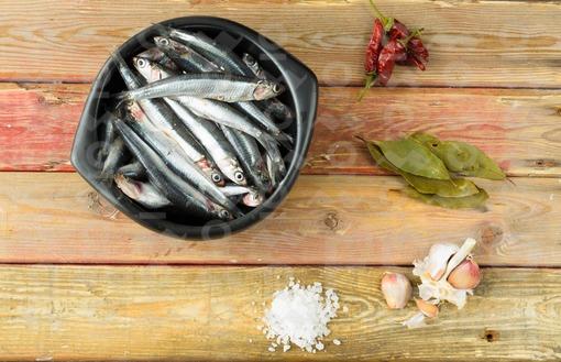 Anchoas (engraulidae)/ anchovy