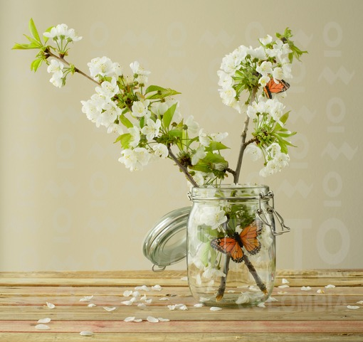 Flor de cerezo/ cherry-tree flower
