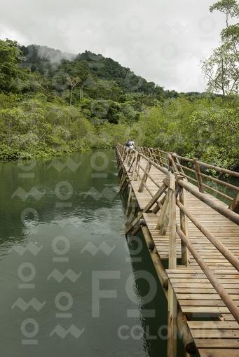 Sendero Manglares Estero Grande,Parque Nacional Natural Utría,Chocó / Mangrove Trail Estero Grande,Utria National Park,Choco