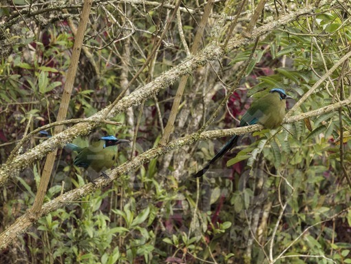 Pájaro Barranquero / Barranquero bird