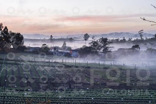 Paisaje Amanecer en el campo (La Unión - Antioquia)