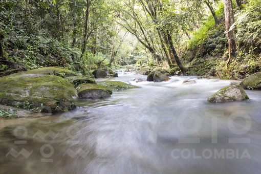 Ríos de San Carlos (Antioquia)