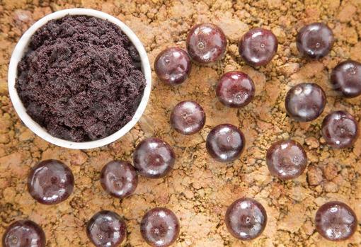Polvo y fruta de acai (Euterpe oleracea)